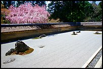 Ryoan-ji Temple has on of the most famous Zen gardens in the karesansui (dry landscape) style, a collection of 15 rocks in a sea of raked sand, enclosed by an earthen wall. Kyoto, Japan (color)
