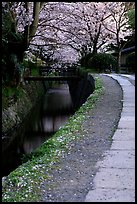 Tetsugaku-no-Michi (Path of Philosophy), a route beside a canal lined with cherry trees. Kyoto, Japan (color)