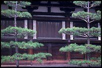 Pines and wooden walls, Sanjusangen-do Temple. Kyoto, Japan
