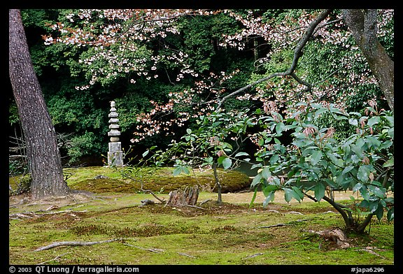 Garden with trees and mosses on the grounds of the Kinkaku-ji Temple. Kyoto, Japan (color)