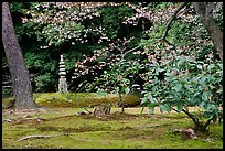 Garden with trees and mosses on the grounds of the Kinkaku-ji Temple. Kyoto, Japan