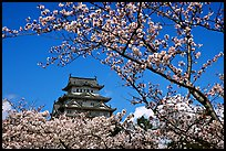 Branch with cherry flowers and castle. Himeji, Japan