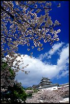 Cherry blooms and castle. Himeji, Japan ( color)