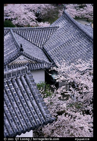 Roofs and cherry blossoms seen from the castle donjon. Himeji, Japan (color)