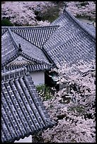 Roofs and cherry blossoms seen from the castle donjon. Himeji, Japan ( color)