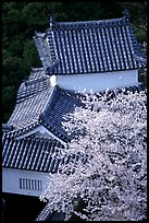 Rooftops and cherry trees seen from the castle donjon. Himeji, Japan (color)