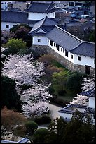Castle grounds with blossoming cherry trees. Himeji, Japan