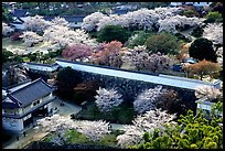 Castle grounds and walls with blossoming cherry trees. Himeji, Japan (color)