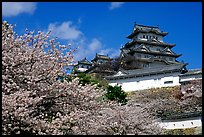 Blooming cherry tree and castle. Himeji, Japan