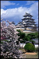 Blossoming cherry tree and castle. Himeji, Japan