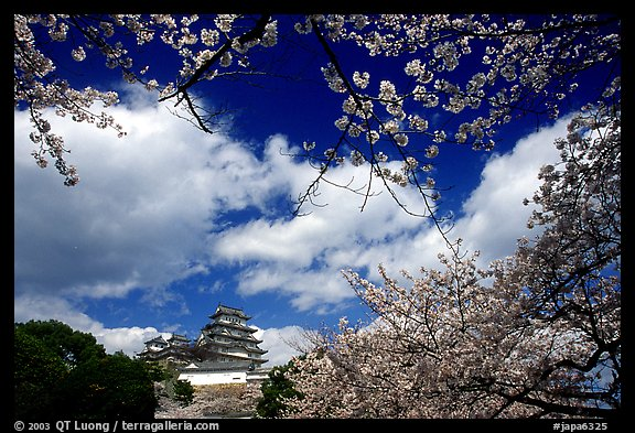Branches of cherry blossoms and castle. Himeji, Japan (color)