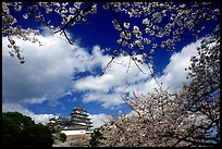 Branches of cherry blossoms and castle. Himeji, Japan ( color)