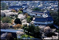 Castle grounds and walls with cherry trees in bloom. Himeji, Japan