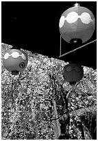 Lanterns and flowering sakura (cherry blossoms), Gion. Kyoto, Japan (black and white)