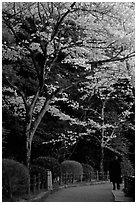 Tetsugaku-no-Michi (Path of Philosophy), a walkway lined up with cherry blossoms. Kyoto, Japan (black and white)