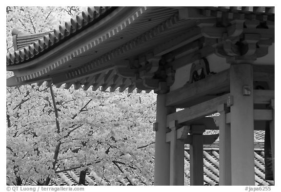 Cherry tree in bloom and temple roof. Kyoto, Japan (black and white)