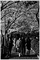 Strollers follow the Tetsugaku-no-Michi (Path of Philosophy), a traffic-free route. Kyoto, Japan (black and white)