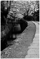 Tetsugaku-no-Michi (Path of Philosophy), a route beside a canal lined with cherry trees. Kyoto, Japan (black and white)