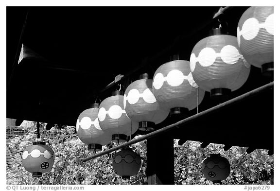 Lanterns and cherry blooms. Kyoto, Japan (black and white)