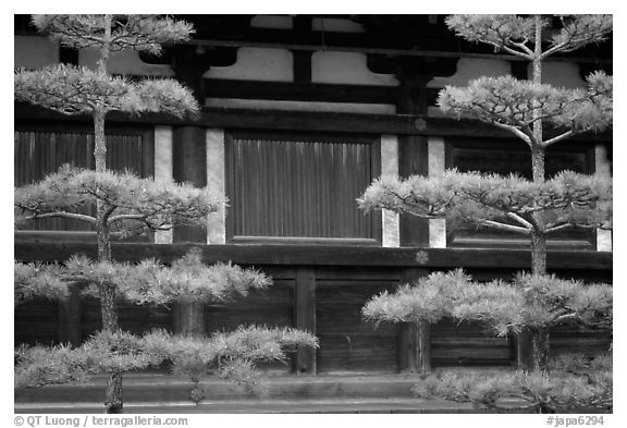 Pines and wooden walls, Sanjusangen-do Temple. Kyoto, Japan (black and white)