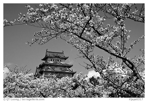 black and white picture photo branch with cherry flowers and castle himeji japan. Black Bedroom Furniture Sets. Home Design Ideas