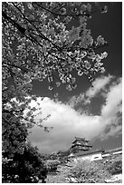 Cherry blooms and castle. Himeji, Japan (black and white)