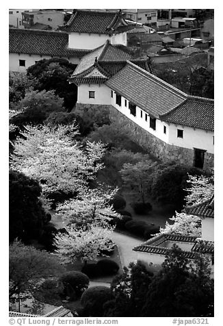 Castle grounds with blossoming cherry trees. Himeji, Japan (black and white)