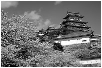 Blooming cherry tree and castle. Himeji, Japan (black and white)