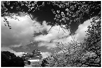 Branches of cherry blossoms and castle. Himeji, Japan (black and white)