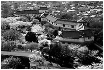 Castle grounds and walls with cherry trees in bloom. Himeji, Japan ( black and white)