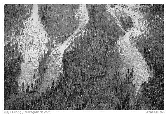 Avalanche gullies. Banff National Park, Canadian Rockies, Alberta, Canada (black and white)