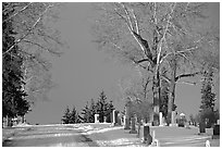 Cemetery in winter. Calgary, Alberta, Canada (black and white)