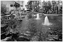 Indoor pond and garden. Calgary, Alberta, Canada ( black and white)
