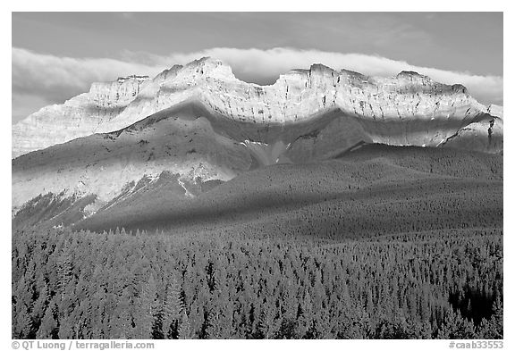 Conifer forest and limestone peaks near Lake Minnewanka, morning. Banff National Park, Canadian Rockies, Alberta, Canada (black and white)