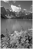 Fireweed and Moraine Lake, late morning. Banff National Park, Canadian Rockies, Alberta, Canada ( black and white)