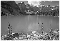 Fireweed and turquoise waters of Moraine Lake, late morning. Banff National Park, Canadian Rockies, Alberta, Canada ( black and white)