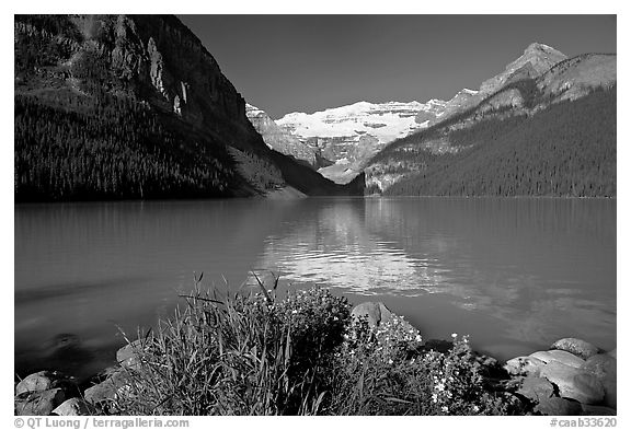 Yellow flowers, Victoria Peak, and green-blue waters of Lake Louise, morning. Banff National Park, Canadian Rockies, Alberta, Canada (black and white)