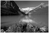 Yellow flowers, Victoria Peak, and green-blue waters of Lake Louise, morning. Banff National Park, Canadian Rockies, Alberta, Canada ( black and white)