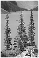 Spruce trees and turquoise blue waters of Moraine Lake , mid-morning. Banff National Park, Canadian Rockies, Alberta, Canada ( black and white)