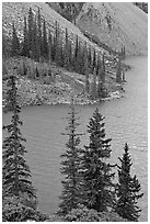 Conifers and blue waters of Moraine Lake. Banff National Park, Canadian Rockies, Alberta, Canada (black and white)
