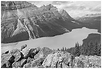 Marmot sitting on a boulder above Peyto Lake. Banff National Park, Canadian Rockies, Alberta, Canada ( black and white)