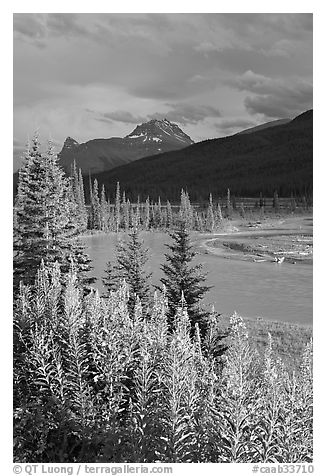 Fireweed, river, and approaching storm. Banff National Park, Canadian Rockies, Alberta, Canada (black and white)