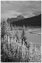 Fireweed, river, and approaching storm. Banff National Park, Canadian Rockies, Alberta, Canada ( black and white)