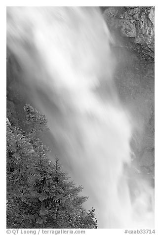 Water and trees, Panther Falls. Banff National Park, Canadian Rockies, Alberta, Canada (black and white)