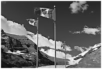 Canadian flags at the Icefieds Center. Jasper National Park, Canadian Rockies, Alberta, Canada (black and white)