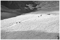Distant view of snowcoaches transporting visitors on the Athabasca Glacier. Jasper National Park, Canadian Rockies, Alberta, Canada (black and white)