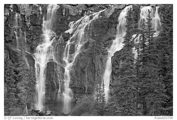 Tangle Falls and trees. Jasper National Park, Canadian Rockies, Alberta, Canada (black and white)