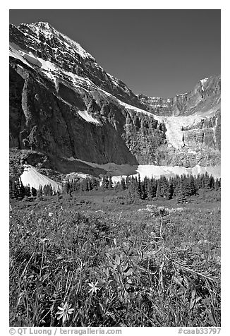 Wildflowers on Cavell Meadows, and Mt Edith Cavell. Jasper National Park, Canadian Rockies, Alberta, Canada (black and white)