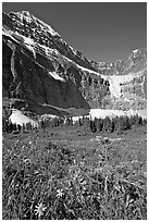 Wildflowers on Cavell Meadows, and Mt Edith Cavell. Jasper National Park, Canadian Rockies, Alberta, Canada ( black and white)