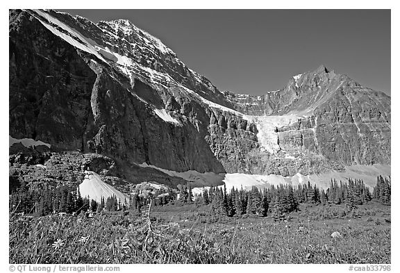 Cavell Meadows, Mt Edith Cavell, and Angel Glacier, morning. Jasper National Park, Canadian Rockies, Alberta, Canada (black and white)